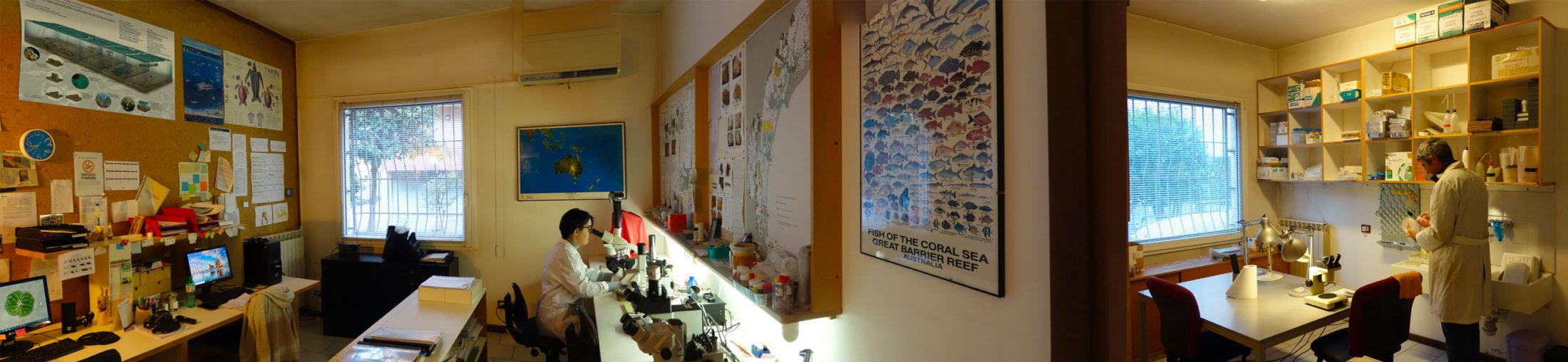 Selc laboratorio biologia