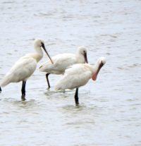 Monitoraggio ornitologico nell'Oasi WWF di Valle Averto